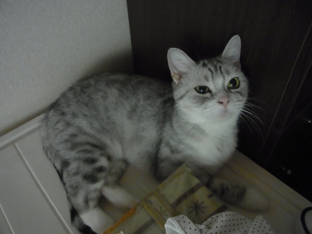 slvianuko-131009-02