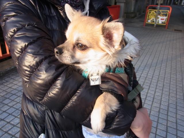 おバカな愛犬を連れてスカイライン-信貴山の朝護孫子寺へ・・・